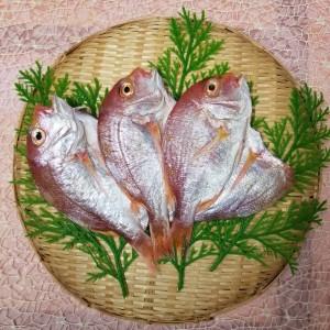 れんこ鯛汐干し(3枚)
