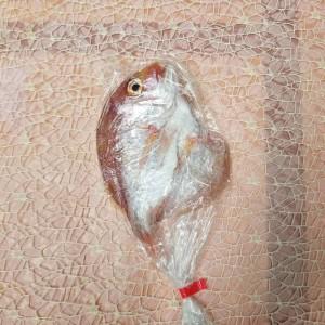 れんこ鯛汐干し(1枚袋入り)